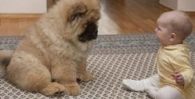 ბავშვი, რომელსაც ცალი მხარე პარალიზებული ჰქონდა, ძაღლმა მოარჩინა