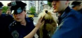 პიკასოს დაჭრის კადრები - დაჭრის შემდეგ ქალს იარაღი ისევ ხელში უჭირავს - ვიდეო