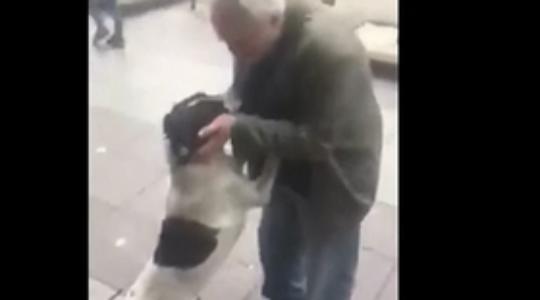 """,,ჟორა, ჟორჟიკ, შენ ხარ, ბიჭო?!"""" – პატრონმა 3 წლის წინ დაკარგული ძაღლი ქუჩაში იპოვა – ვიდეო"""