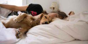 უმჯობესია, გეძინოთ ძაღლთან, ვიდრე კაცთან