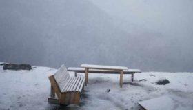 გუდაურში თოვს - ვიდეო