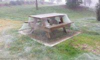 ობობების ქსელში გახვეული ავსტრალია – ფოტოები