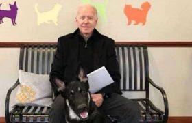 ჯო ბაიდენმა უპატრონო ძაღლი აიყვანა, რომ თეთრ სახლში წაიყვანოს
