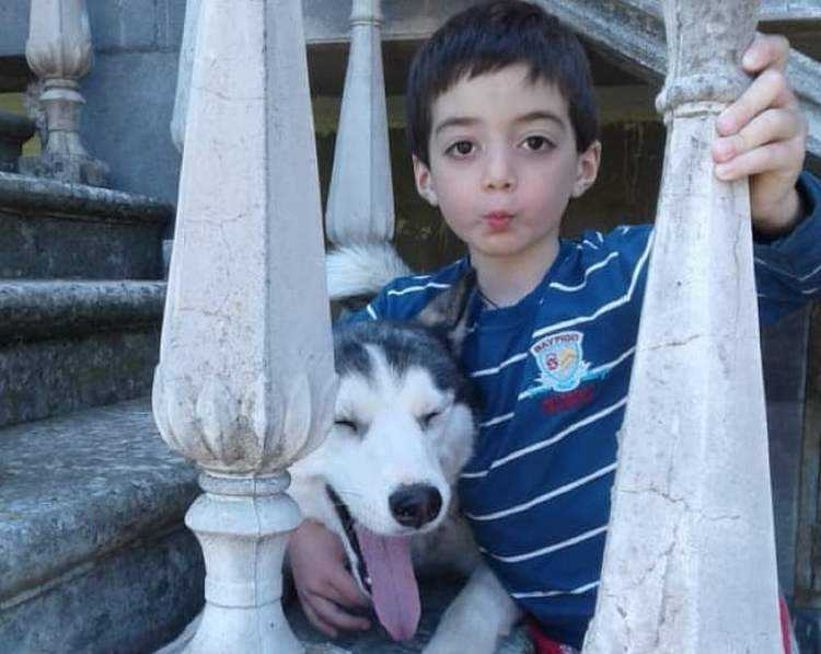 როგორ გადაარჩინეს ჰასკებმა 5 წლის გაბრიელი - ძაღლებმა ჯარისკაცებივით იბრძოლეს